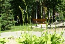 Park i ogród sensoryczny przy Domu Pomocy Społecznej w Rabce - Zdroju